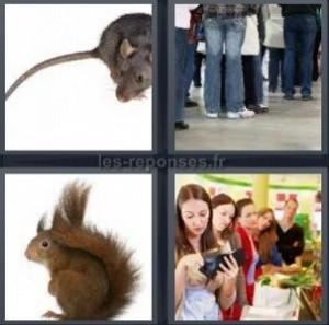 Solution 4 Images 1 Mot Rat Gens Ecureuil File D Attente 5 Lettres