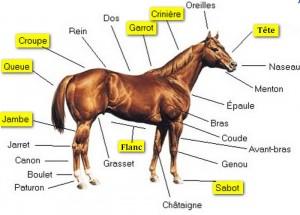partie cheval 94%