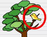 stump me oiseau arbre